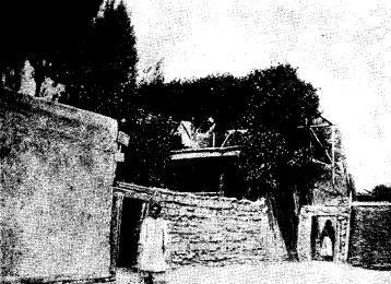 Уиноградник над кровлей кокандского дома